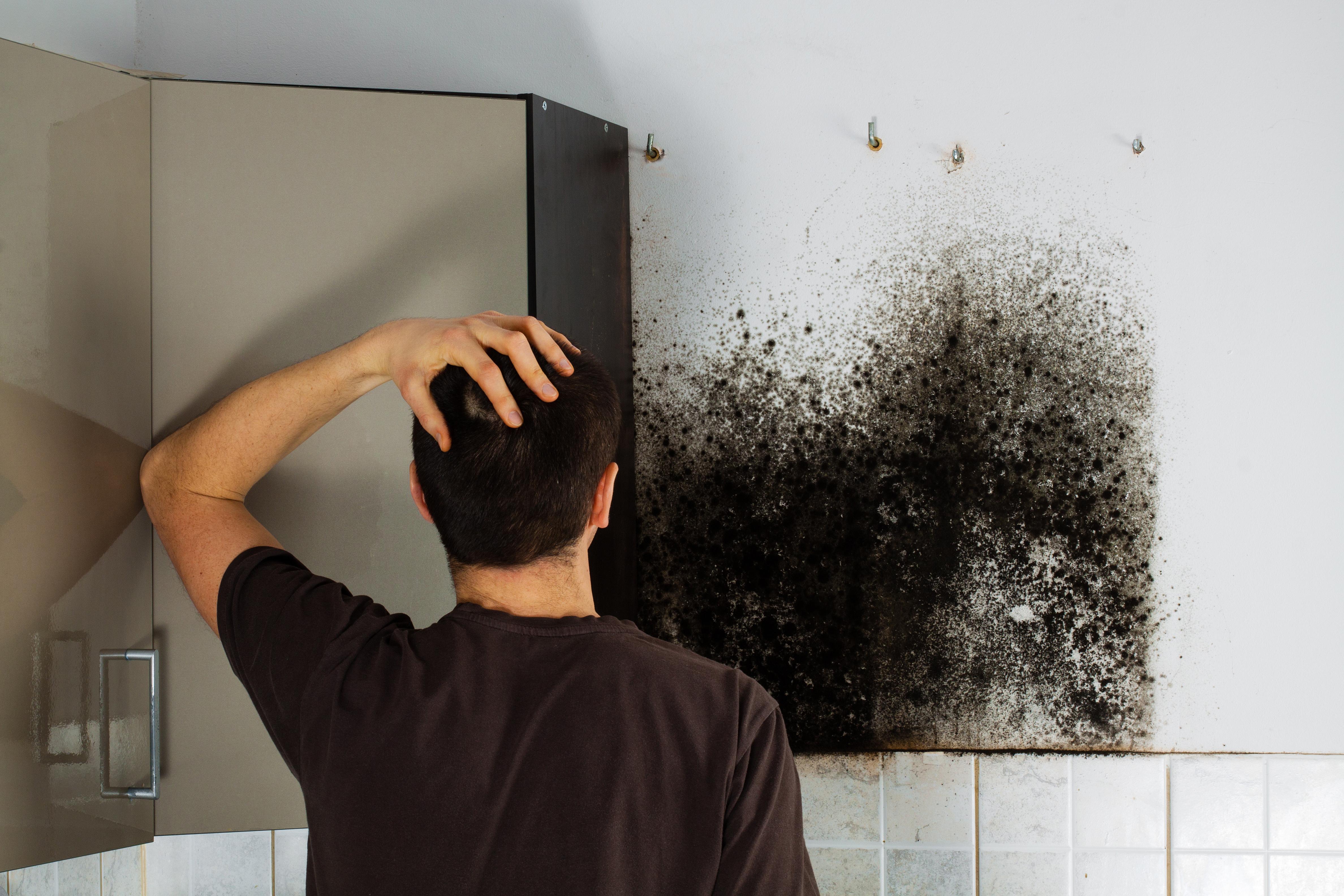 Umidità In Casa Rimedi Della Nonna muffa in casa: che fastidio quelle macchie! • smart building