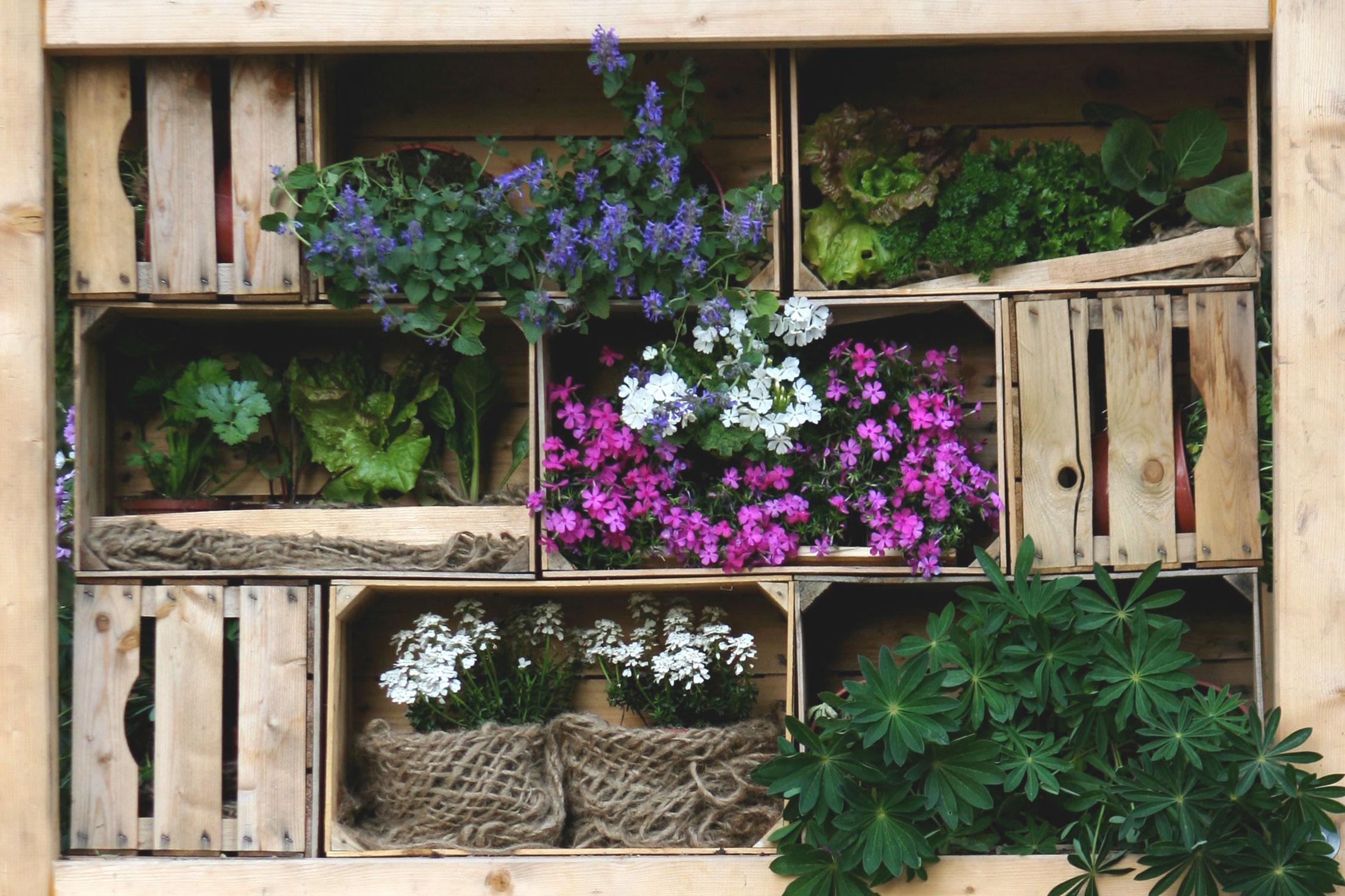 Consigli Pratici Per Realizzare Il Tuo Orto Sul Balcone O In Cucina